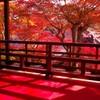 柳谷観音上書院の秋2