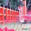 上賀茂神社と彼岸花