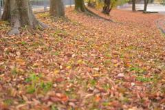 落葉のジュウタン