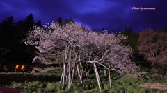 飛騨の桜めぐりⅣ