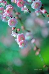 早春の輝き