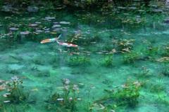 モネの池(絵画のように)
