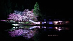 宮谷の桜(ライトアップ)