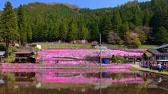 国田家(くにたけ)の芝桜