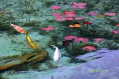 モネの人気鯉