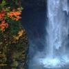 秋•白水の迫力