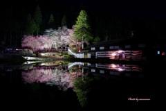 飛騨桜めぐりⅡ