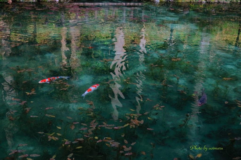 モネの池 ゆらり