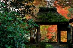 京都の秋●安楽寺