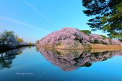 彦根城 桜リフレクション