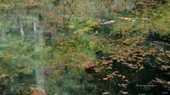 モネの池 春の映り込み