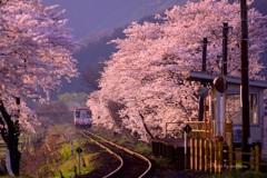桜樽見鉄道