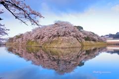 桜 彦根城