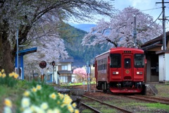 桜浪漫ながら