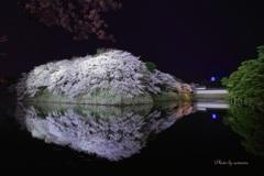 桜彦根城ライトアップ