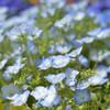 春の花壇で