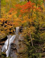秋色の流れ