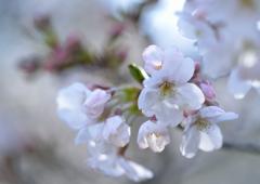 明るい春を願って
