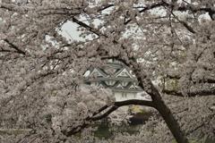 桜の窓から