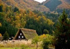 茅葺屋根の秋