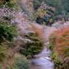 桃(桜)源郷へつづく道