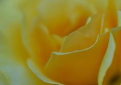 黄色い笑顔