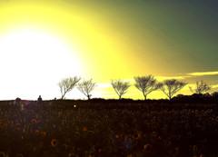 夕陽に向かって