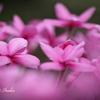 花の舞踏会