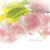 柔らかな桜色