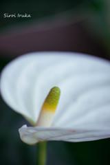 白の美しさ