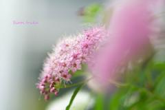 ピンクの心