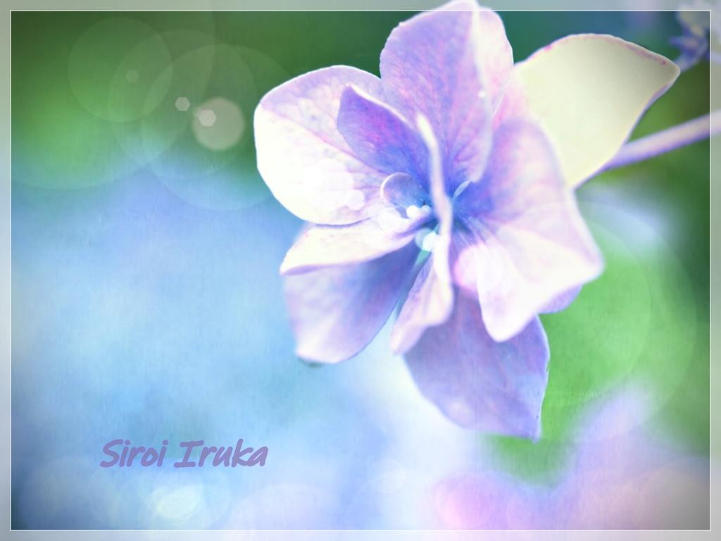 violetの誘惑