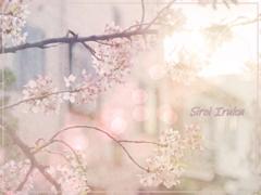 桜色の思い出