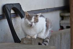 ごはんを待つ猫たち1