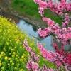 春の隼人堀川2