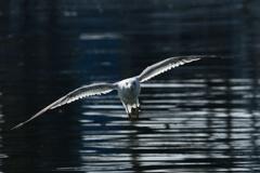 氷見漁港の海鳥