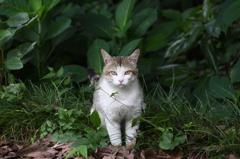 玉敷神社のネコ