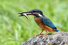 小魚ゲット1