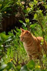 権現堂のネコ