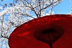 春の権現堂2