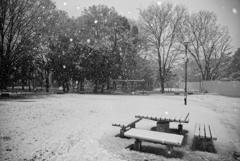 春に降る雪
