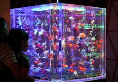 art aquarium kanazawa-6