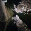 満開の金沢城