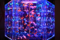 art aquarium kanazawa