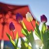 春 LALALA ♪♪♪