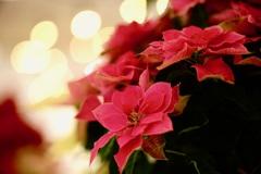 Star of Bethlehem.ꕤ*.゚