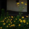 路端の黄色い花