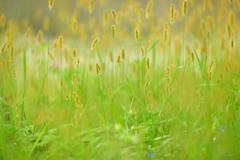 夏草の余韻