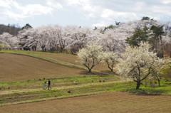 春の里山2