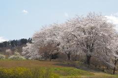 春の里山3